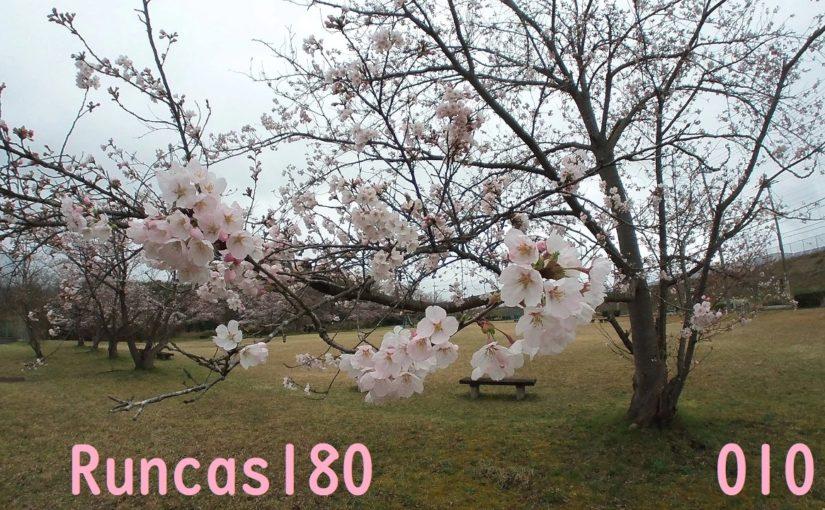 Runcas180 2020/03/28 桜並木ラン 9.0km